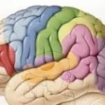 Training für Ihr Gehirn