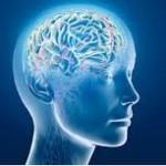 Sprachenlernen hält unser Gehirn besonders fit