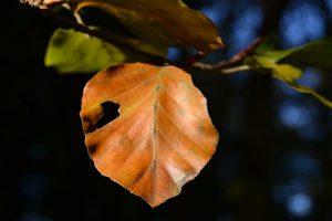 Herbstblatt im Wind