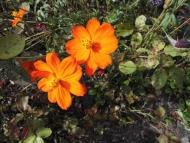 Goldener Herbst mit Blumen