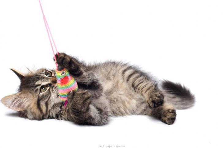 Kleine Katze mit Spielzeug - Nie wieder alleine im Alter