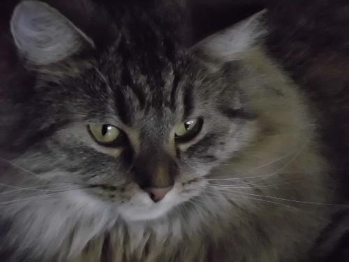 Meine Katze Kira hat heute ihren 2. Geburtstag