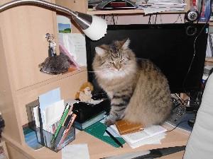 Meine Katze Kira auf meinem PC-Tisch