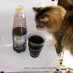 Gütekontrolle durch meine Katze