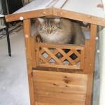 Ein Katzenhaus auf dem Balkon im Winter