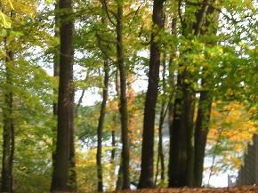 im goldenen Herbst im Wald am See