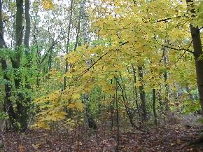 im goldenen Herbst im Wald