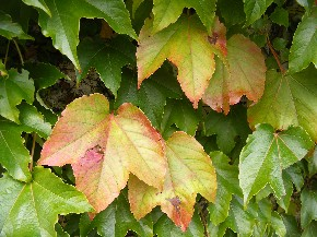 Im goldenen Herbst