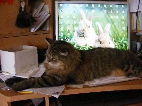 Meine Katze fordert meine Aufmerksamkeit und blockiert meinen Computer