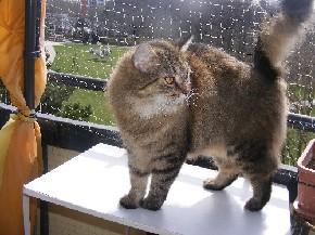 Ich habe meinen Balkon mit einem bissfesten Katzennetz gesichert.