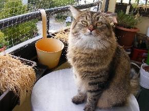Der Lieblingsplatz meiner Katze auf dem Balkon ist ein kleiner Tisch mit Marmorplatte.
