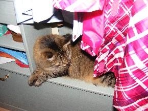 Hinter den Kleidungsstücken fühlt sich meine Katze auf der Gardeobe sehr wohl.
