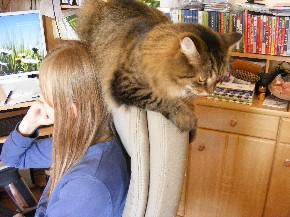 Meine Katze muss immer mittendrin sein.