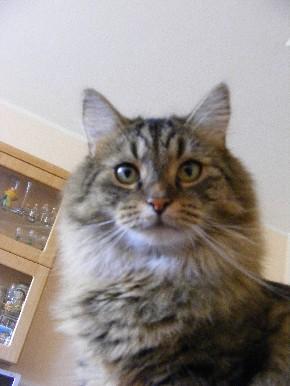 Meine Katze ist stets sehr aufmerksam.