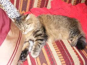 Mit Kissen schlafen Katzen sehr gern