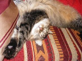 Katzen können in jeder Position schlafen