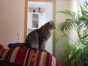 Katzen wollen alles mitkriegen, auch wenn es Vögel in einem Baum vor dem Haus sind.