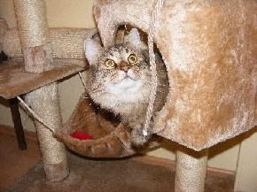In ihrer Höhle macht es sich meine Katze gemütlich
