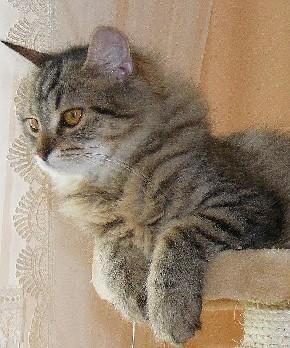 Vom Kratzbaum im Wohnzimmer hat Kira den besten Überblick und kann auch aus dem Fenster schauen.