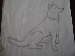 Weißer Schäferhung Trixi mit Bleistift gemalt