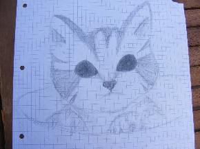 Katze mit Bleistift gemalt
