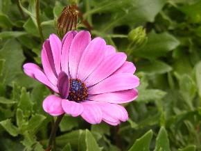 Goldene Herbsttage - wunderschöne Blume