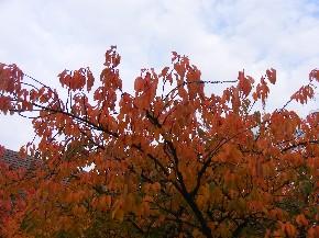 Goldene Herbsttage - Wallpaper