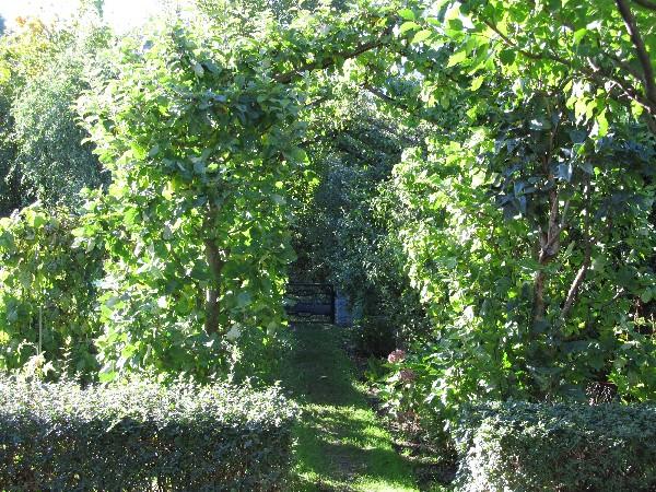 Grün überdachter Gartenweg mit Spalierobst