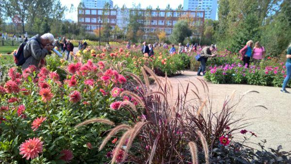 Der Dahliengarten hat nicht nur mich fasziniert